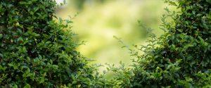 Concursul interscolar: Scoala Reciclarii – prezent si viitor verde